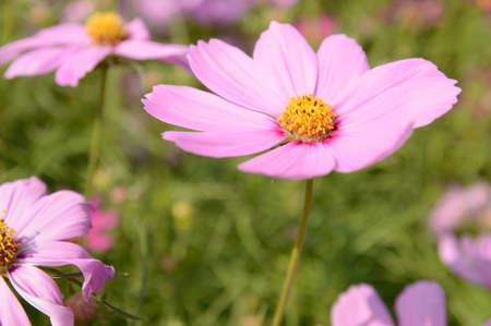 hidef: Pink flower