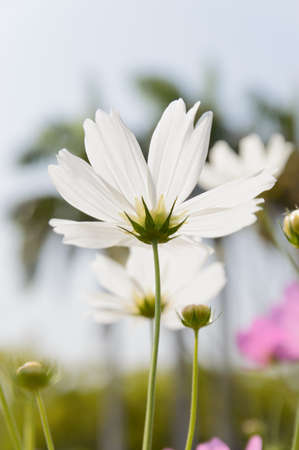 crowded space: White flower in the park Stock Photo