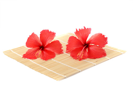 frilly: studio shot frilly red petals of exotic red hibiscus flower on white