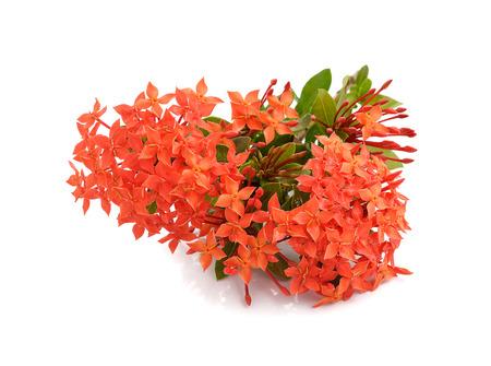 spike: Red spike flower