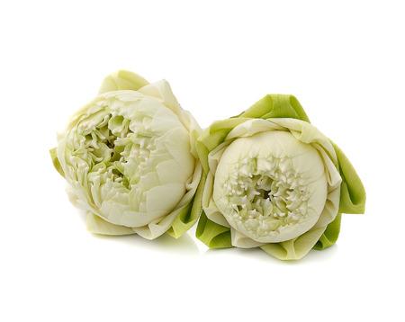 nelumbinis: beautiful white Lotus flower