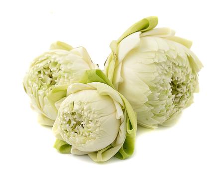 egyptian lily: beautiful White Lotus flower, isolated on white background Stock Photo