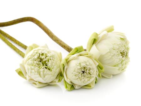 nelumbinis: beautiful White Lotus flower, isolated on white background Stock Photo