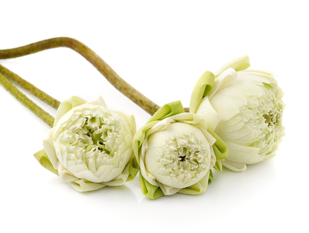 Schöne Weiße Lotus-Blume, Isoliert Auf Weißem Hintergrund ...