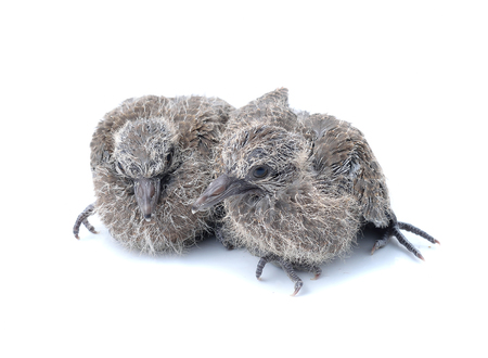 juveniles: Newborn bird. Are trying to help themselves Stock Photo