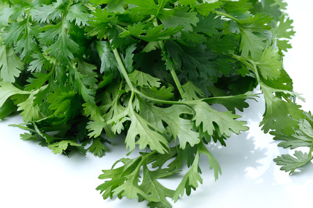 curly leafed: Green coriander leaves close-up, isolation on a white background.