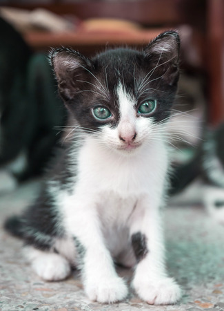 tilt: Little cute kitten, selective focus on its eye, tilt head