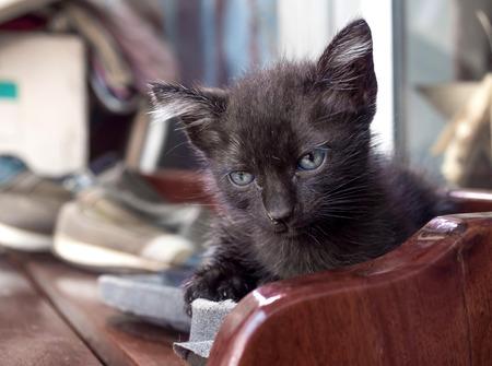 shoe shelf: Dirty little cute black cat on outdoor shoe shelf Stock Photo
