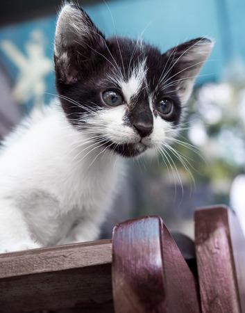 shoe shelf: Little cute black and white kitten look down from outdoor shoe shelf, selective focus on its eye