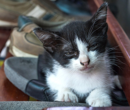 shoe shelf: Little cute black and white kitten with half open eye lay on outdoor shoe shelf with natural light; selective focus on its eye