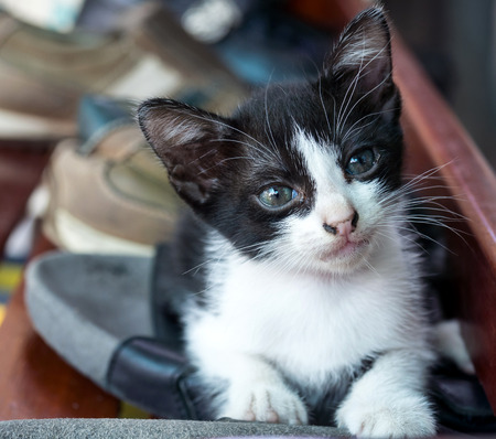 shoe shelf: Little cute black and white kitten lay on shoe shelf, selective focus on its eye Stock Photo