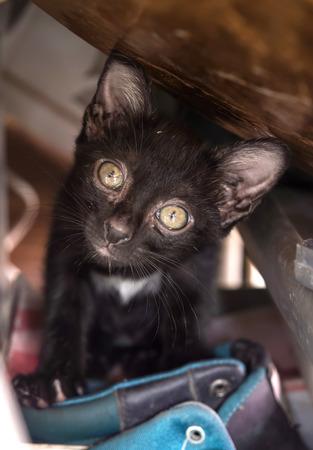 shoe shelf: Dirty black cute kitten tilt head inside shoe shelf, selective focus on its eye Stock Photo