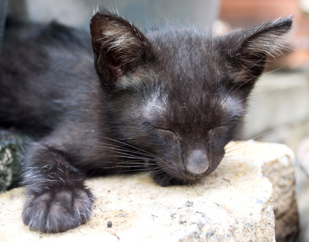 eyes closing: Unhealthy black kitten with dirty discharged eyes closing eyes, selective focus on its eye, lay on garden floor