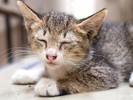 luz natural: Lindo gatito gris yac�a en el suelo bajo la luz natural, foco selectivo en el ojo