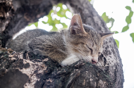 eyes closing: Little cute scaring gray kitten stuck on tree and trying to climb down with closing eyes, selective focus on its eye