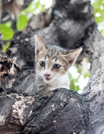 scaring: Little cute scaring gray kitten stuck on tree and trying to climb down, selective focus on its eye