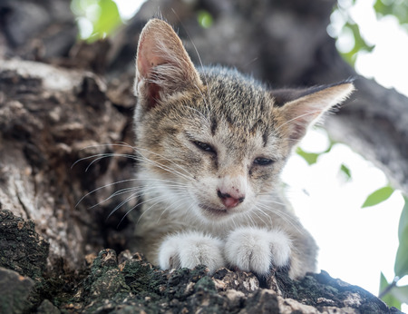 closing eyes: Little cute scaring gray kitten stuck on tree and trying to climb down with closing eyes, selective focus on its eye