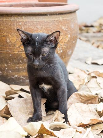 a toilet stool: Little cute kitten sit in toilet position in outdoor garden, selective focus on its eye