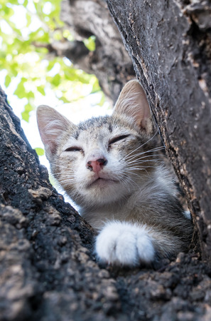 eyes closing: Little cute gray kitten closing eyes and sleep on outdoor tree with background leaves bokeh, selective focus on its eye