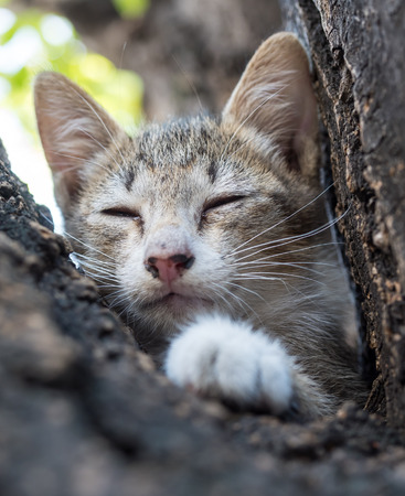 closing eyes: Little cute gray kitten closing eyes and sleep on outdoor tree with background leaves bokeh, selective focus on its eye