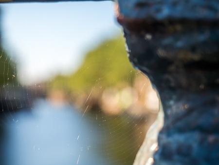 luz natural: Spider web with blurring background under natural light