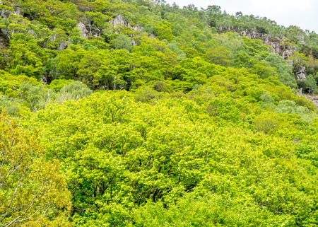Green tree in forest for background Stock Photo