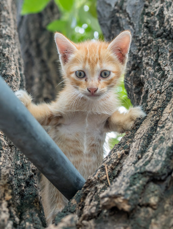 Little cute golden brown kitten climb up on outdoor large tree, selective focus on its eye Stock Photo