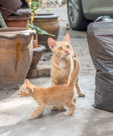cat walk: Mother cat walk together with its little baby kitten on concrete floor in backyard outdoor garden, selective focus on cats eye