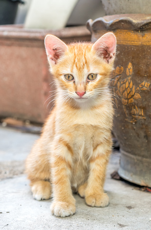 Small cute golden brown kitten sit on outdoor backyard concrete floor under natural light, selective focus on its eye