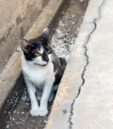Little black and white kitten sit in dirty drain in backyard, selective focus on its eye