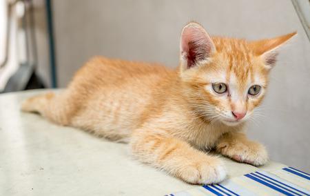 Little cute golden brown kitten sit in untidy backyard under natural light, selective focus on its eye