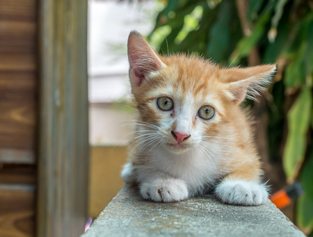 Little cute golden brown kitten sit on outdoor backyard corridor under natural light, selective focus on its eye