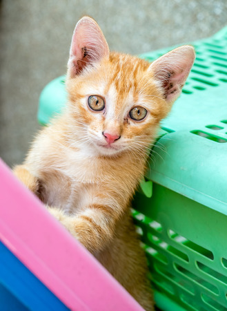 Small cute golden brown kitten stand beside green basket in outdoor backyard under natural light, selective focus on its eye