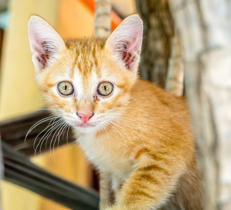 Small cute golden brown kitten relax in outdoor untidy backyard garden under natural light, selective focus on its eye