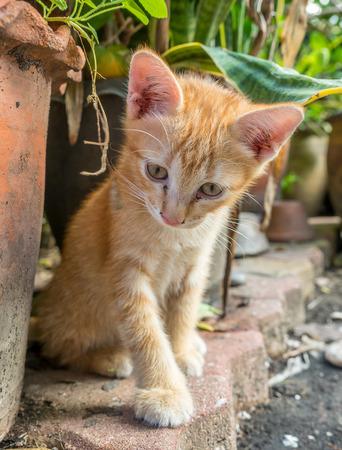 Little cute golden brown kitten hide in outdoor backyard garden, selective focus on its eye Stock Photo