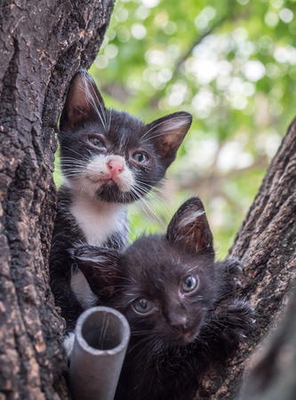 Two little cute black and white kittens climb up on outdoor tree, selective focus on ones eye