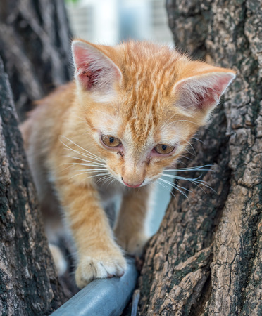 Little cute golden brown kitten plays acrobat with metal bar on backyard outdoor tree, selective focus on its eye