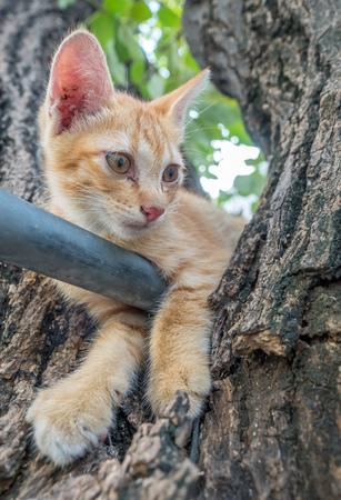 acrobat: Little cute golden brown kitten plays acrobat with metal bar on backyard outdoor tree, selective focus on its eye