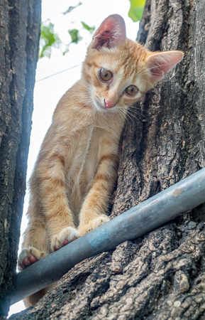 attempt: Little cute golden brown kitten plays acrobat with metal bar on backyard outdoor tree, selective focus on its eye
