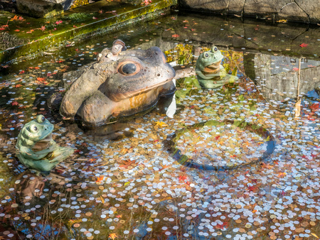 Small swamp with toad sculpture in Japanese temple, with a lots of coins in water