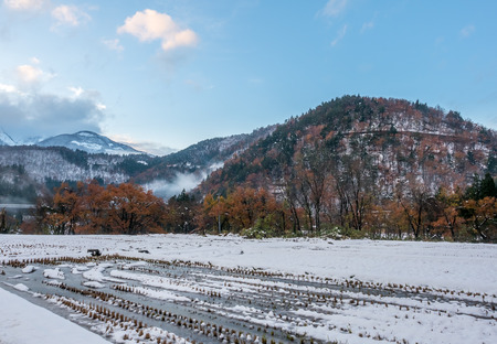 Leafless tree on mountain in Shirakawa village with snow in early winter season in Gifu, Japan