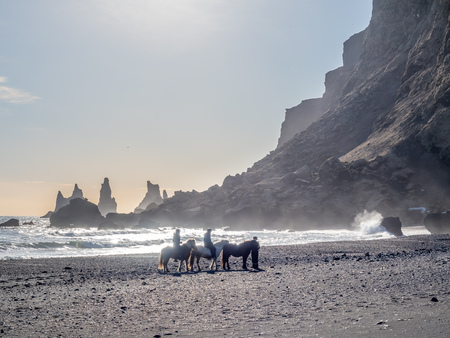 Reynisfjara black sand beach is landmark of Vik town in Iceland, surrounded with basalt mountains, with three riding horses on the beach