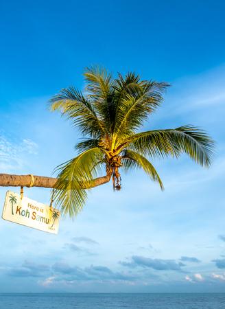 Horizontal grow coconut tree at sand beach under cloudy blue sky at Samui island, Thailand Stockfoto