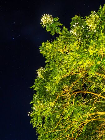 Green leaves tree in dark night background