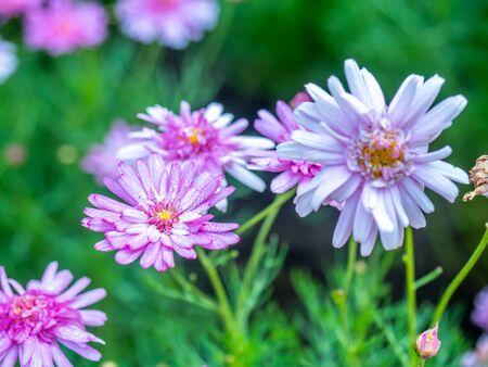 Small purple flowers in field