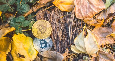 Golden and silver bitcoin in autumn in forest , park .Concept of modern exchange value, electronic money virtual pay , future concept. Used for investing in stocks and market in autumn , brown leaves
