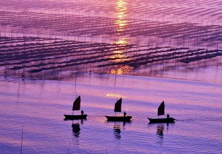 China Fujian coast, farming seaweed, beautiful sunrise scenery Zdjęcie Seryjne
