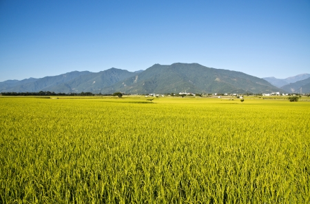Beautiful pastoral scene in Taitung, Taiwan photo