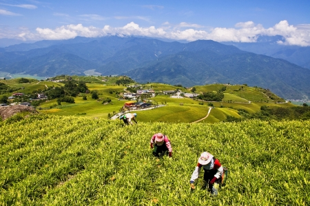 The beautiful mountains of eastern Taiwan 版權商用圖片