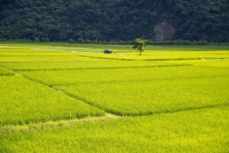 pastoral: Beautiful pastoral scene in Taitung, Taiwan,